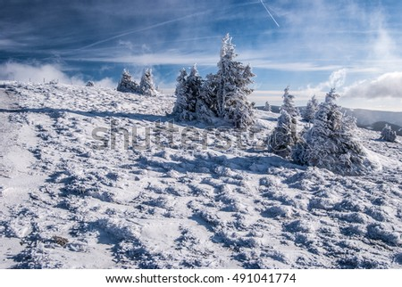 snow covered mountain meadow with few small isolated trees near Grazer Stuhleck hill in winter Fischbacher Alpen mountain range in Styria