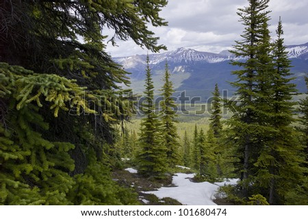 Snow covered trails in a forest with mountains in the background, Bald Hills Trail, Jasper National Park, Alberta, Canada - stock photo