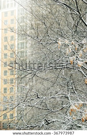 snow-covered tree branches against the backdrop of high-rise bui