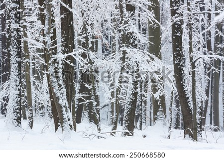 snow covered tree branches in winter landscape
