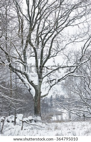 Snow covered tree in the forest in winter time