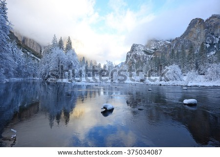 Snow covered tree in yosemite with reflection