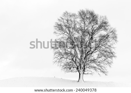 Snow covered tree isolated on white background photographed near Andechs, Bavaria, Germany