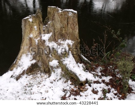 Tree stumps snow stock photos images pictures for What is a tree trunk covered with 4 letters