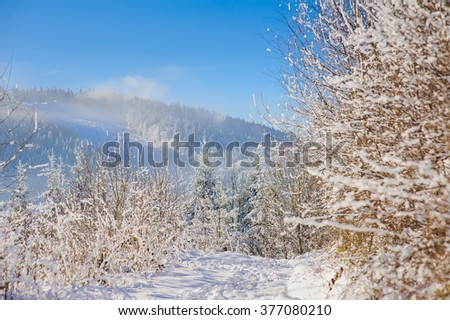 Snow covered trees and bushes with snow. The mountain trail is covered with a variety of footprints in the snow. Sky, clouds, haze or fog, mountains in the background. - stock photo