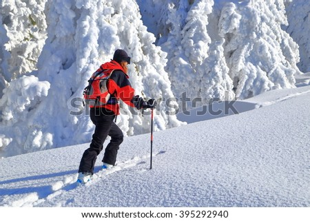 Snow covered trees and isolated skier ascending on touring skis  - stock photo