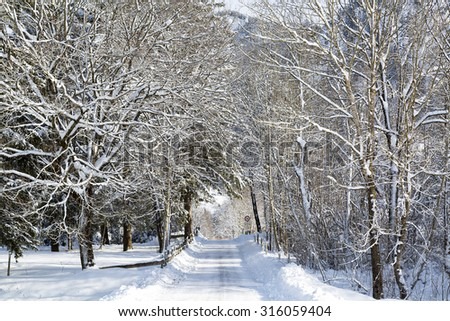 Snow covered trees and road, Alps - stock photo