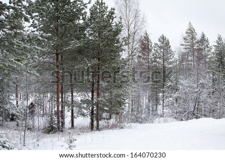 snow covered trees and road in winter - stock photo