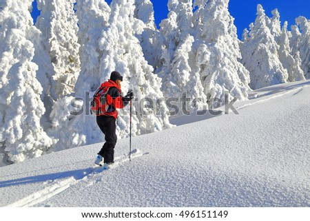 Snow covered trees and ski mountaineer ascending on sunny mountain slope