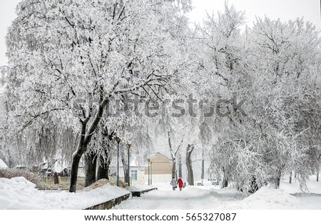 Snow-covered trees in a city park in the winter