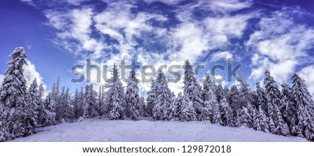 Snow-covered trees in a ski resort of Carpathian Mountains.Panorama. - stock photo