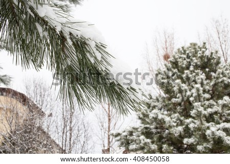 Snow covered trees in the backyard. - stock photo