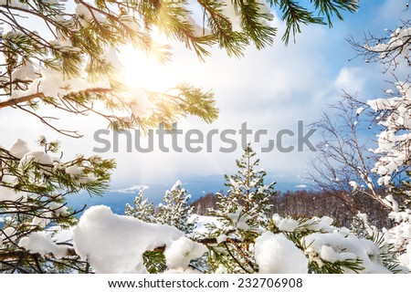 Snow covered trees in the mountains at sunset. Beautiful winter landscape. Winter background.  - stock photo