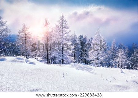 Snow covered trees in the mountains at sunset. Beautiful winter landscape. Winter forest. Creative toning effect - stock photo