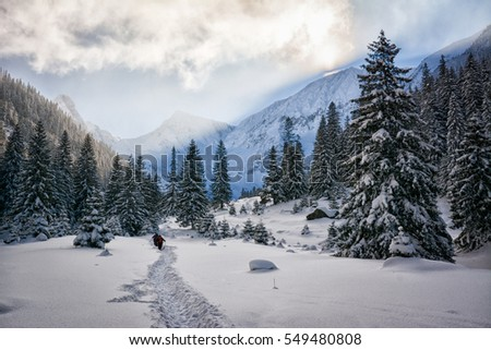 Snow covered trees in the mountains at sunset. Beautiful winter landscape. Winter forest. Creative toning effect