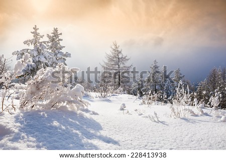 Snow covered trees in the mountains at sunset. South Ural, Russia.  Fantastic landscape glowing by sunlight - stock photo