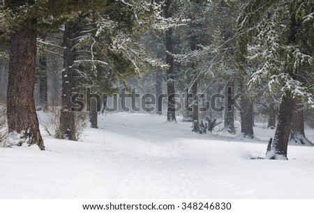 Snow covered trees in the winter forest with road - stock photo