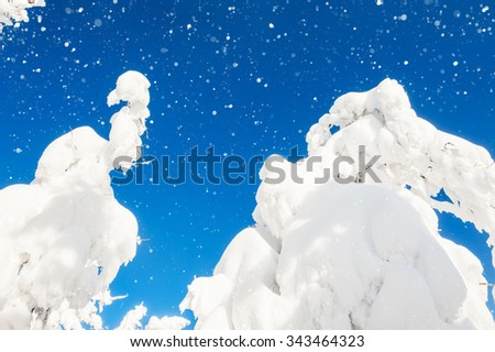 Snow-covered trees in winter forest. Beautiful landscape.