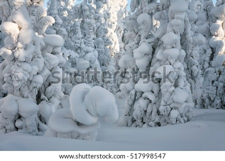 Snow-covered trees in winter wood, Siberia, Russia