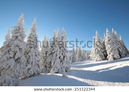 Snow-covered trees lit by the morning sun. - stock photo