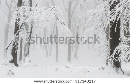 Snow covered winter forest landscape