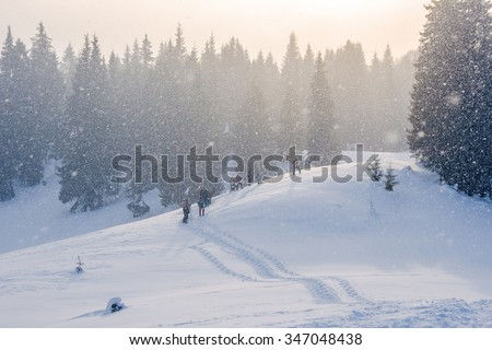 Snow-covered winter mountain path with hikers and pine-forest at sunset blizzard - stock photo