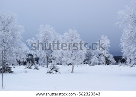 Snow covering trees in a winter day