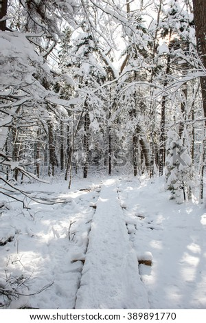 Snow covers an elevated wooden path through the woods on a winter day in Maine