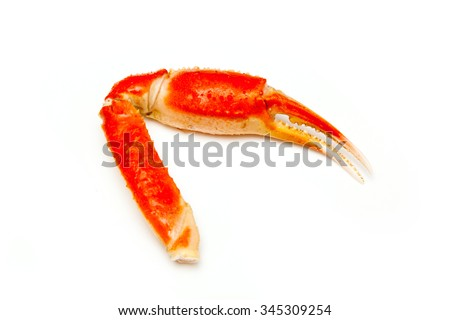 Snow crab (Chionoecetes opilio) or Tanner crab claw isolated on a white studio background. - stock photo