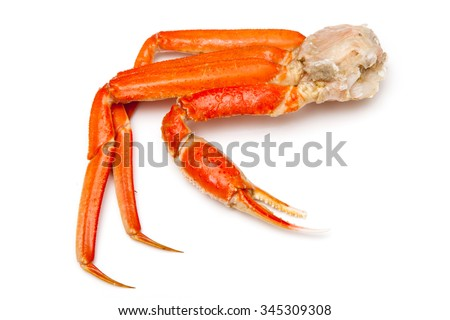 Snow crab (Chionoecetes opilio) or Tanner crab isolated on a white studio background.
