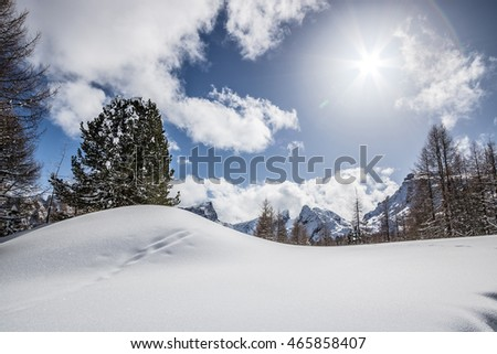 Snow dune with pine trees in the Dolomites, Italian Alps