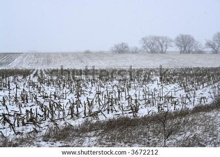 Snow falling on the farm - stock photo