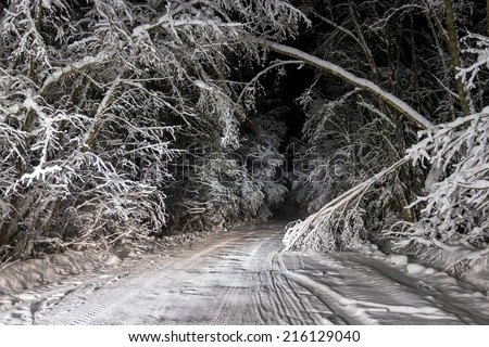 Snow falls on a winter road in the night forest - stock photo