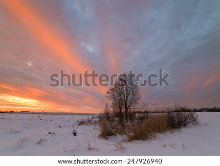 Snow field and lonely tree with last not flown leaves. - stock photo