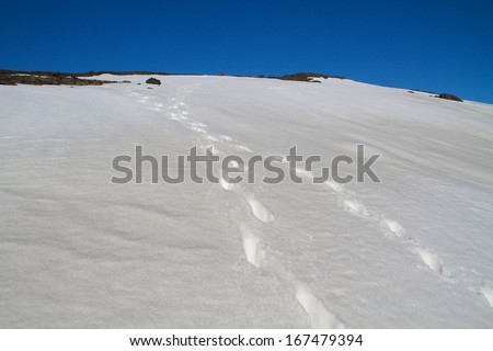 snow field with footsteps