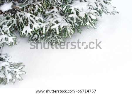 snow fir tree branches under snowfall. framework for text - stock photo