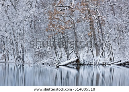 Snow flocked trees on the shoreline of Hall Lake with reflections in calm water, Yankee Springs State Park, Michigan, USA