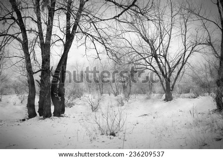 Snow in a frozen dark forest