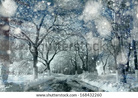 Snow in the woods - stock photo