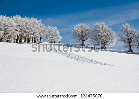 Snow landscape with frozen trees and traces on the snow