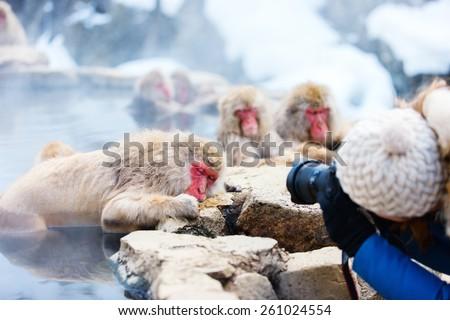 Snow Monkeys Japanese Macaques bathe in onsen hot springs at Nagano, Japan - stock photo