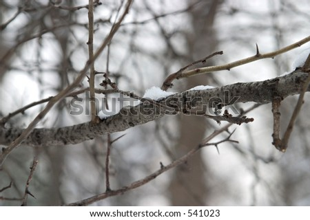 snow on a branch - stock photo