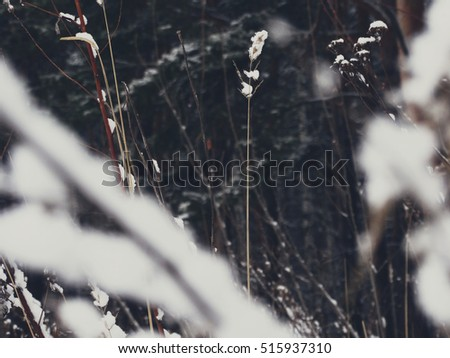 Snow on dead wood nature cold frost winter forest nature wallpaper style minimalism background wallpaper abstract