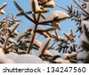 Snow on fir branches in winter, from below, looking above - stock photo