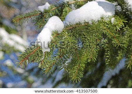 Snow on spruces branch - stock photo