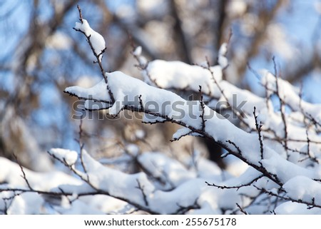 snow on the branches of a tree against the blue sky - stock photo