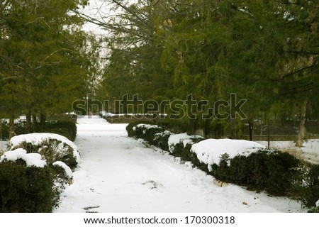 snow on the road in the park