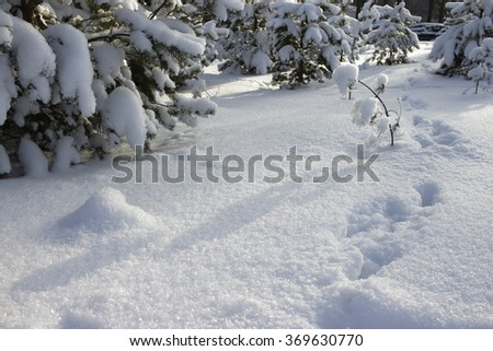 Snow on the trees in winter - stock photo
