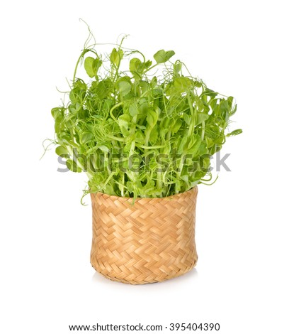 snow pea sprouts or Toumyou sprouts in bamboo basket on white background - stock photo