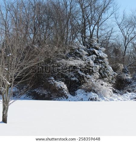 Snow Scene - stock photo
